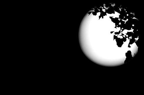 【原创诗歌】白月光图片