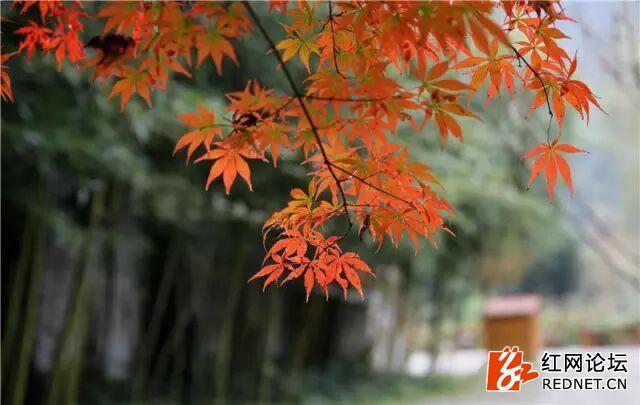 秋天4.jpg