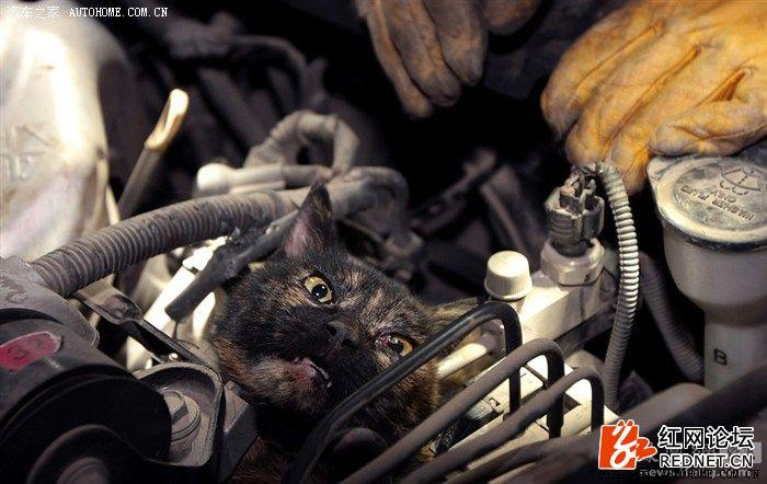 猫进车1.jpg