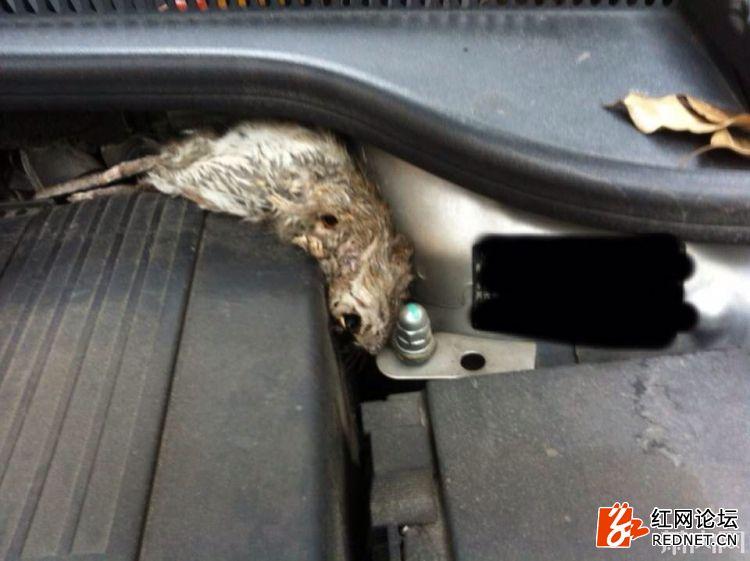 死老鼠1.jpg