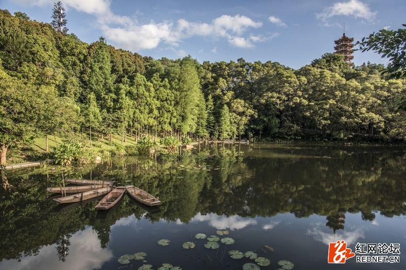 nEO_IMG_仙湖植物园 (1).jpg