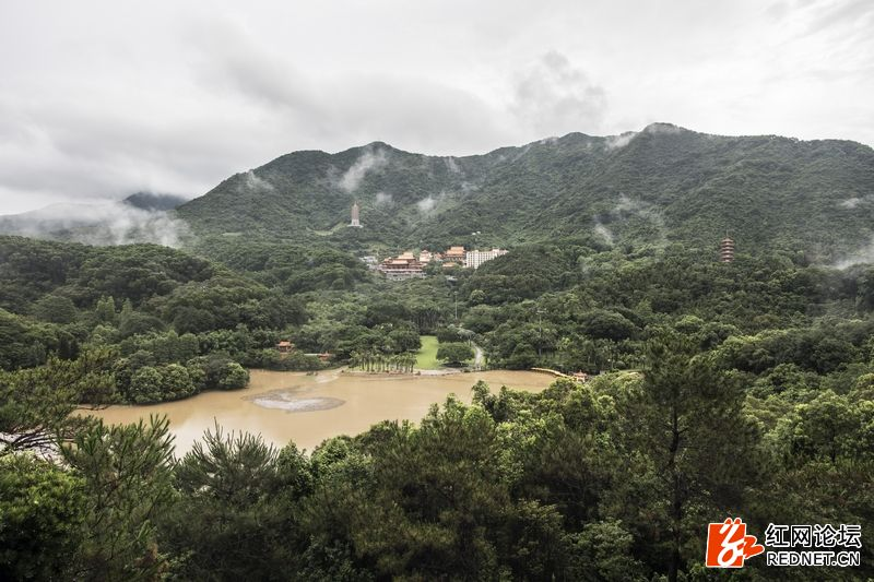 nEO_IMG_仙湖植物园 (3).jpg