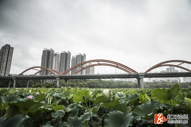 nEO_IMG_洪湖公园.jpg