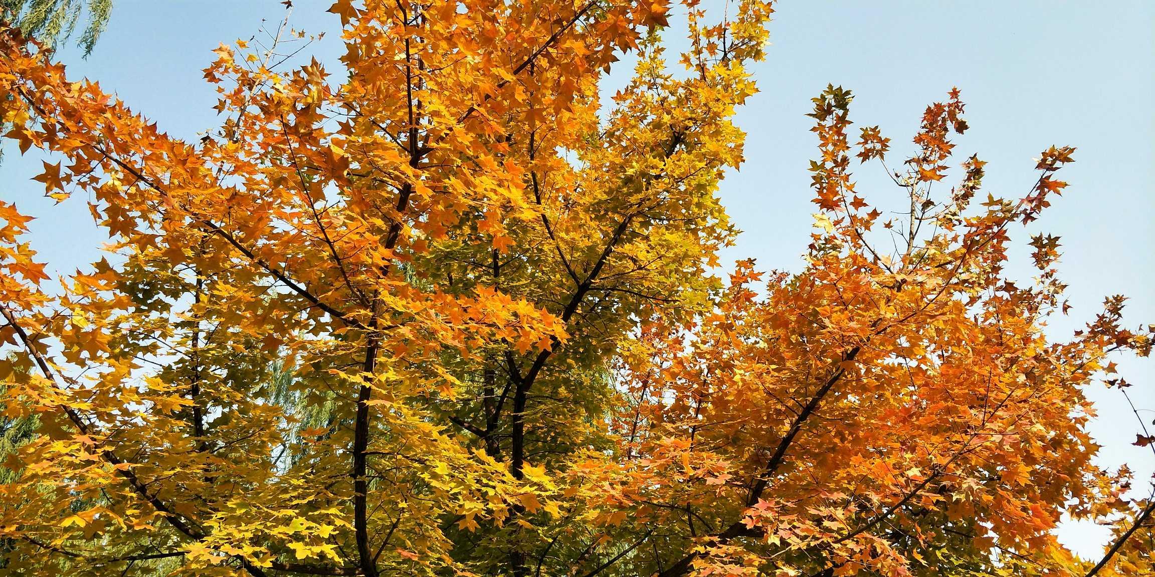 祖国景色处处美——深秋叶儿美