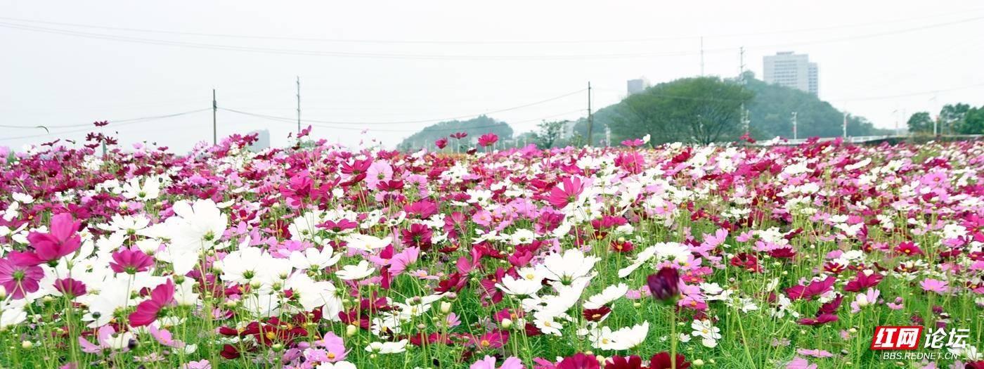 DSC_5538_副本.jpg