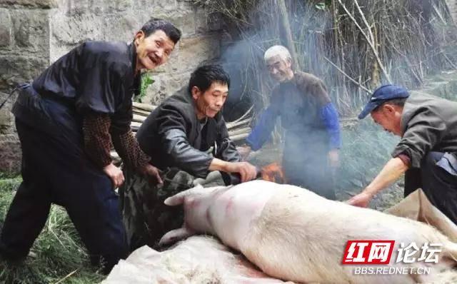 农村摆宴席,准备食材杀猪.jpg